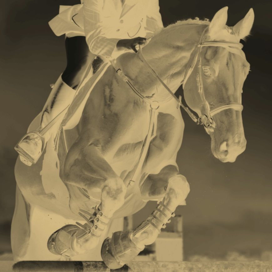 Training Routines for Dressage Horses