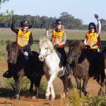 Icelandic Horses Endurance Ride