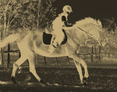 Winning Colors in Horse Racing